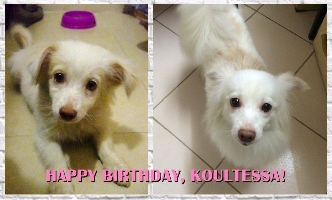 Happy Birthday Koolit-2016-Blog