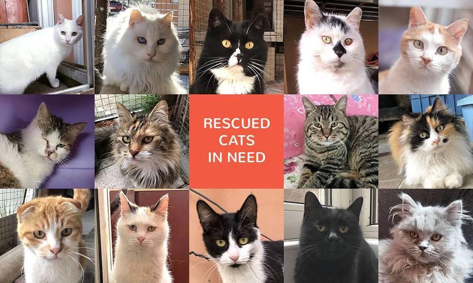 Online Cat Art Poster Auction